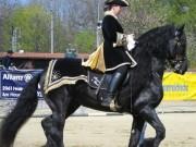 128-2842 IMG - Pferderasse FRIESEN