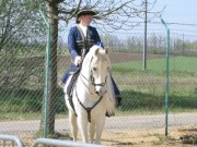 128-2845 IMG - Pferderasse: Andalusier