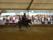 136-3690 IMG * Horse Spinning