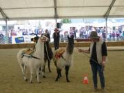 136-3697 IMG * Team der Lamas