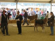 137-3703 IMG * Lamas als Lastenträger (bis ~ 30 kg)