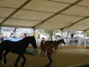 137-3704 IMG * Natural Parelli Horsemanship