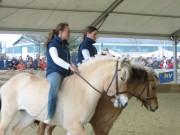 137-3715 IMG * Vielseitigkeit der Fjordpferde