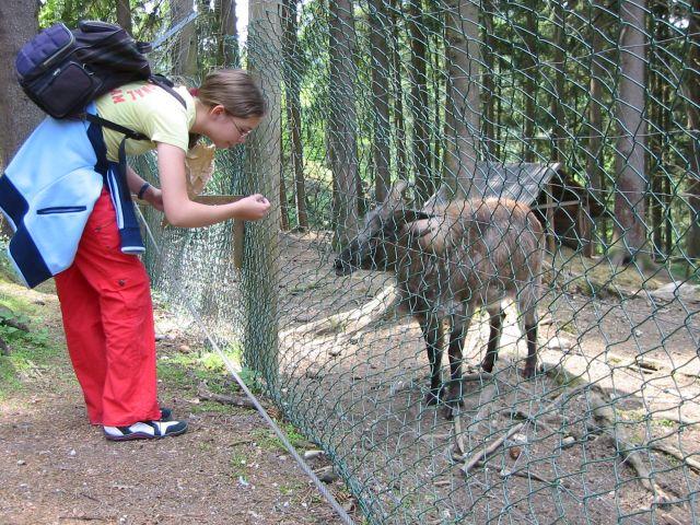 Animal child sticker knight ref 15223 15223