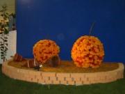 134-3440 IMG * Wachauer Marillen aus lauter orangenen Blumen